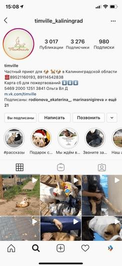 фото помощь приюту для собак